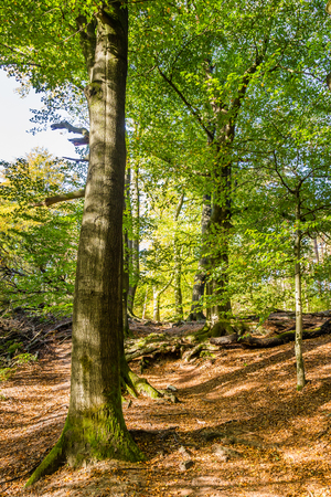 Photo for Trail through National Park Posbank Veluwe in Gelderland, Netherlands - Royalty Free Image