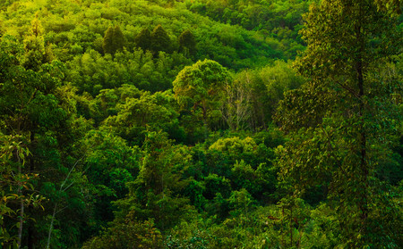 Photo for Lush tropical forest background. forest and environment concept - Royalty Free Image