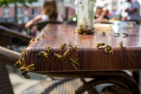 Photo for Wasps in a cafe - Royalty Free Image