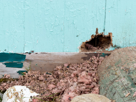 Photo for Exterior house wall mouse squirrel rodent messy burrow pest damage - Royalty Free Image