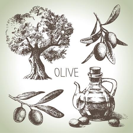 Illustration pour Hand drawn olive set  - image libre de droit