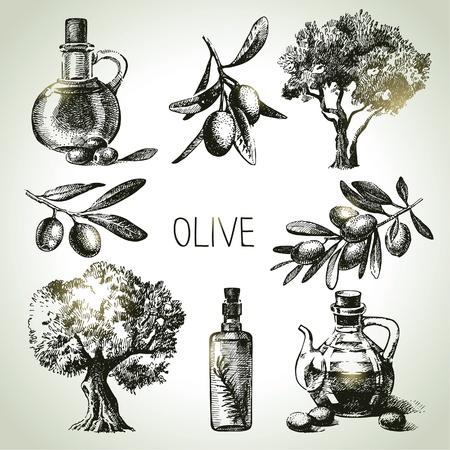 Ilustración de Hand drawn olive set  - Imagen libre de derechos