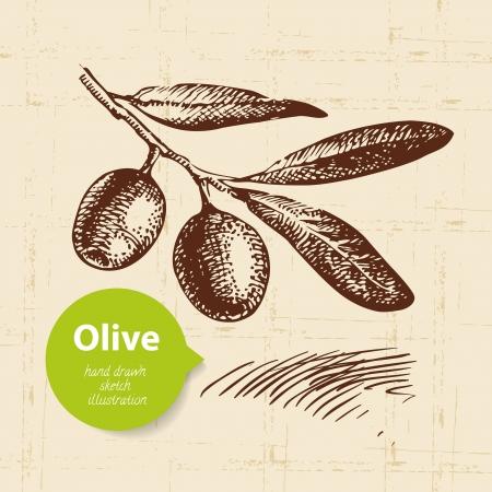 Illustration pour Vintage olive background. Hand drawn illustration - image libre de droit