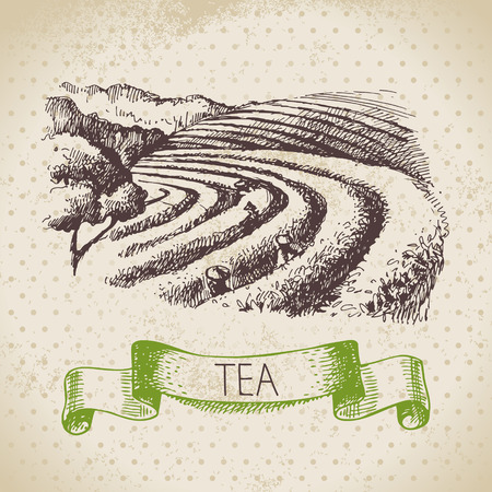 Illustration pour Tea vintage background. Hand drawn sketch illustration. Menu design - image libre de droit