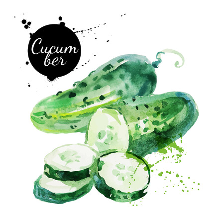 Illustration for Green cucumber. Hand drawn watercolor painting on white background. Vector illustration - Royalty Free Image
