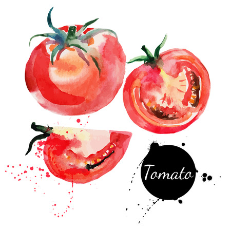Illustration pour Tomato set  Hand drawn watercolor painting on white background  Vector illustration - image libre de droit