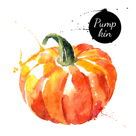 Illustration pour Pumpkin. Hand drawn watercolor painting on white background. Vector illustration - image libre de droit