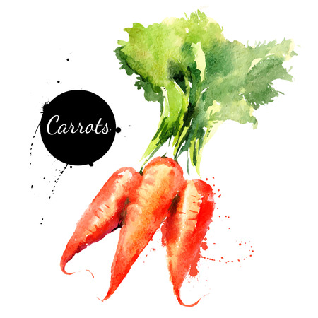 Illustration pour Carrots. Hand drawn watercolor painting on white background. Vector illustration - image libre de droit