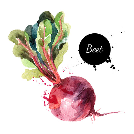 Illustration pour Beet. Hand drawn watercolor painting on white background. Vector illustration - image libre de droit