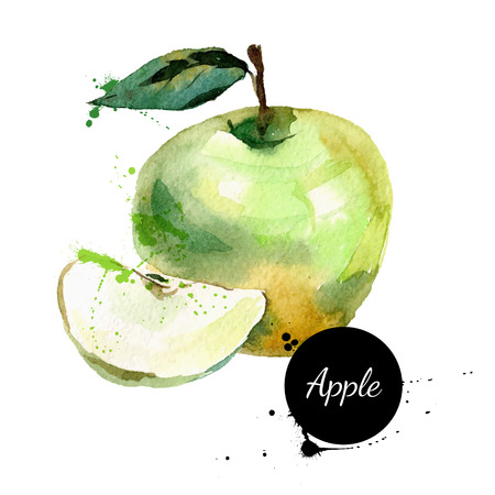 Illustration pour Hand drawn watercolor painting on white background. Vector illustration of fruit apple - image libre de droit