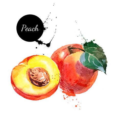 Illustration pour Hand drawn watercolor painting on white background. Vector illustration of fruit peach - image libre de droit