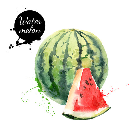 Illustration pour Hand drawn watercolor painting on white background. Vector illustration of fruit watermelon - image libre de droit