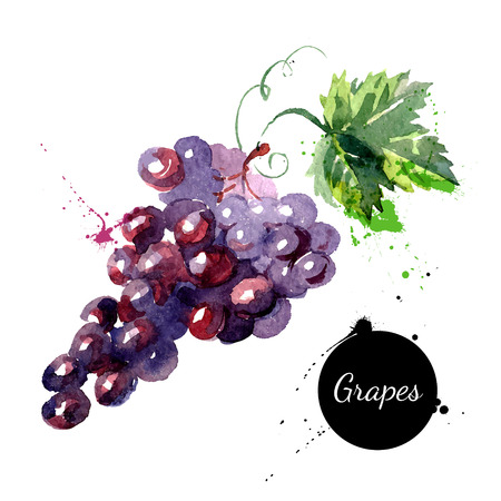 Illustration pour Hand drawn watercolor painting on white background. Vector illustration of fruit grapes - image libre de droit