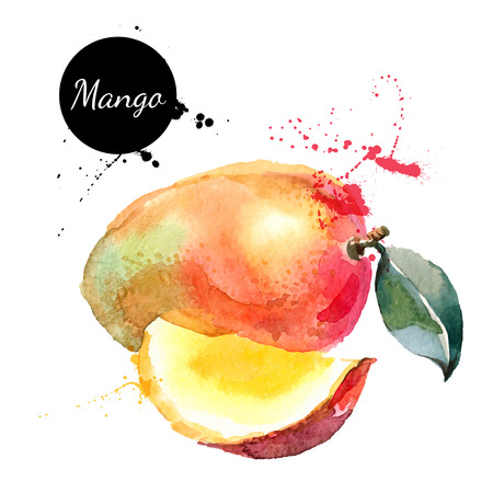Illustration pour Hand drawn watercolor painting on white background. Vector illustration of fruit mango - image libre de droit