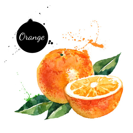 Ilustración de Hand drawn watercolor painting on white background. Vector illustration of fruit orange - Imagen libre de derechos