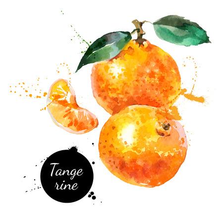 Illustration pour Hand drawn watercolor painting on white background. Vector illustration of fruit tangerine - image libre de droit