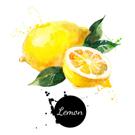 Ilustración de Hand drawn watercolor painting on white background. Vector illustration of fruit lemon - Imagen libre de derechos