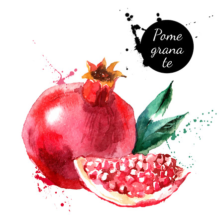 Illustration pour Hand drawn watercolor painting on white background. Vector illustration of fruit pomegranate - image libre de droit