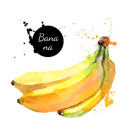 Illustration pour Hand drawn watercolor painting on white background. Vector illustration of fruit banana - image libre de droit