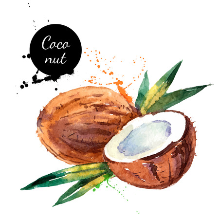 Illustration pour Hand drawn watercolor painting on white background. Vector illustration of fruit coconut - image libre de droit