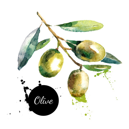 Illustration pour Hand drawn watercolor painting on white background. Vector illustration of fruit olives - image libre de droit