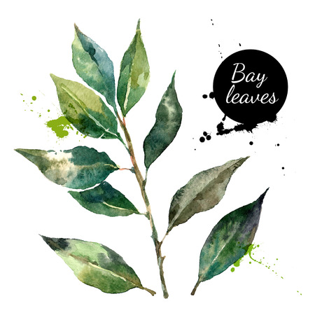 Illustration for Kitchen herbs and spices banner. Vector illustration. Watercolor bay leaf - Royalty Free Image