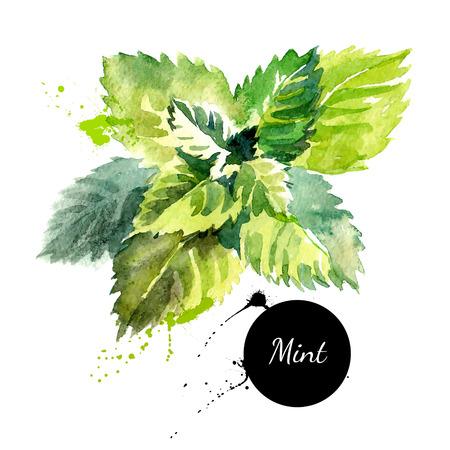 Ilustración de Kitchen herbs and spices banner. Vector illustration. Watercolor mint - Imagen libre de derechos