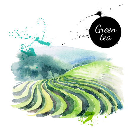 Illustration pour Watercolor hand drawn painted tea vector illustration. Menu design - image libre de droit