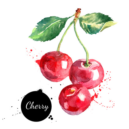 Ilustración de Hand drawn watercolor painting cherry on white background. Vector illustration of berry - Imagen libre de derechos