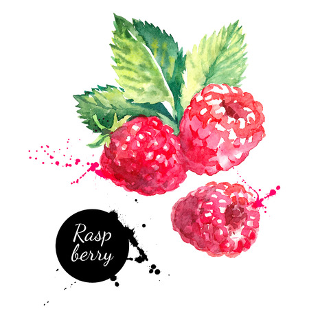 Ilustración de Hand drawn watercolor painting raspberry on white background. Vector illustration of berries - Imagen libre de derechos