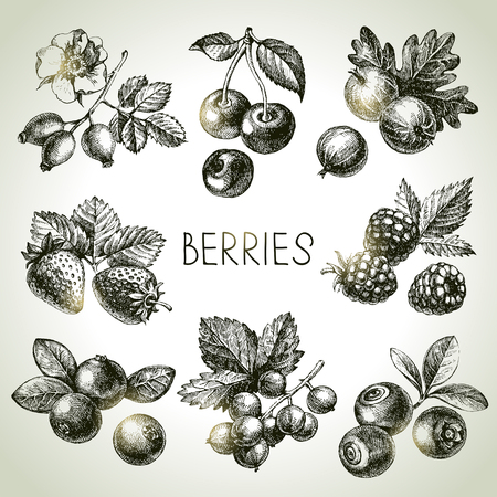 Illustration for Hand drawn sketch berries set. Vector illustration of eco food - Royalty Free Image