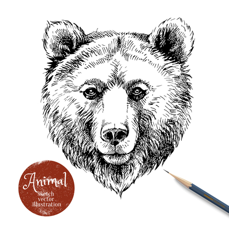 Ilustración de Hand drawn brown bear animal vector illustration. Sketch isolated bear portrait on white background with pencil and label banner - Imagen libre de derechos