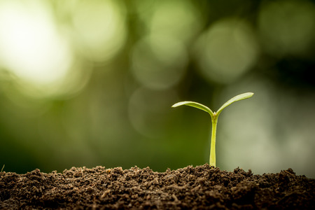 Photo pour Young plant growing in soil on green bokeh background - image libre de droit