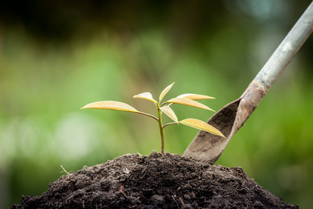 Photo for Young plant growing in soil with shovel on green background - Royalty Free Image