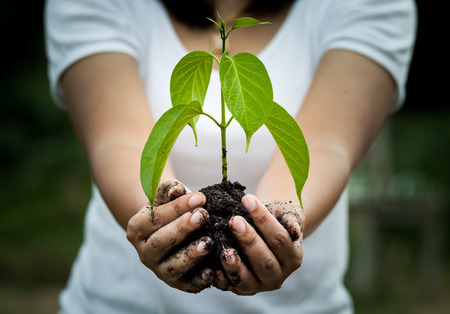 Photo pour Woman hand holding  young tree in soil for prepare plant on ground,save world concept - image libre de droit