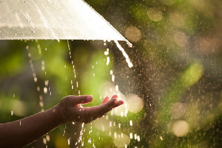 Foto de Woman hand with umbrella in the rain in green nature background - Imagen libre de derechos