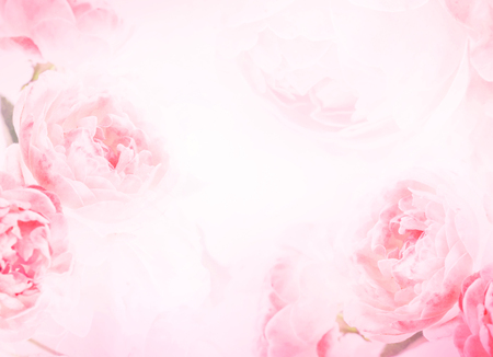 Foto de soft sweet pink rose flowers for love romance background - Imagen libre de derechos