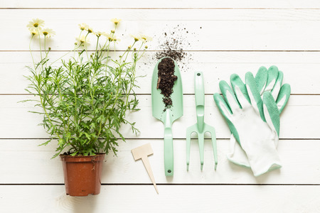 Gardening tools, flower in pot and gloves on white wooden table. Spring in the garden concept, top view, flat lay composition.