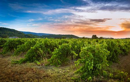 Photo pour Vineyard and sunset - agriculture. South Europe, Provence (France) countryside landscape. - image libre de droit