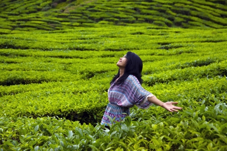 Young happy woman spreading hands with joy in tea plantation, Cameron highlands, Malaysia