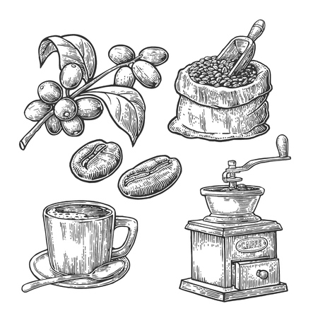 Illustration for Sack with coffee beans with wooden scoop and beans, cup, branch with leaf and berry. Hand drawn sketch style. Vintage vector engraving illustration for label, web.  Isolated on white background. - Royalty Free Image
