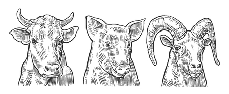 Ilustración de Farm animals icon set. Pig, cow and goat heads isolated on white background. Vector black vintage engraving illustration for menu, web and label. Hand drawn in a graphic style. - Imagen libre de derechos