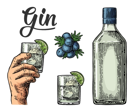 Illustration for Glass and bottle of gin and branch of Juniper with berries. Vintage vector engraving illustration for label, poster, web, invitation to party. Isolated on white background - Royalty Free Image