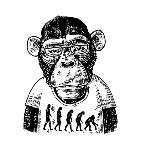 Illustration for Monkeys in a T-shirt with the theory of evolution on the contrary. - Royalty Free Image