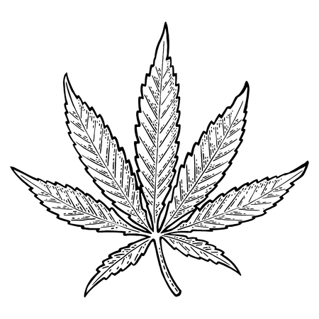 Illustration for Marijuana leaf. Vintage black vector engraving illustration - Royalty Free Image