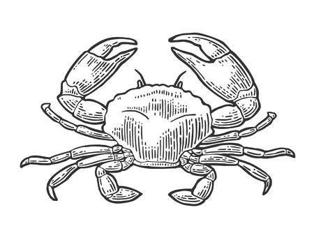 Illustration for Crab isolated on white background. - Royalty Free Image