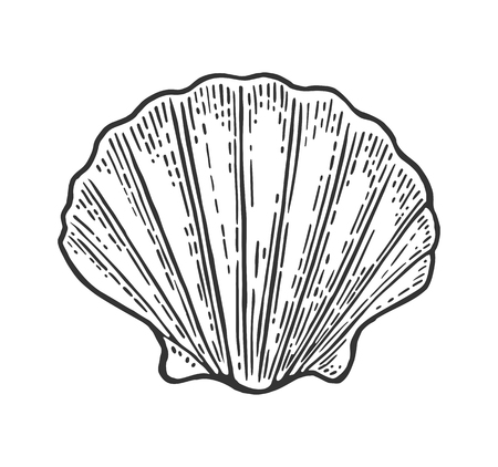 Ilustración de Sea shell Scallop. Color engraving vintage illustration. Isolated on white background. - Imagen libre de derechos