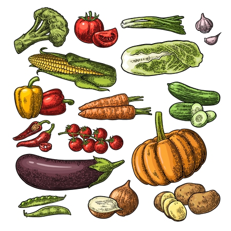 Illustration for Set vegetables. Cucumbers, Napa cabbage, Pea pod, Onoin, Garlic, Corn, Pepper, Broccoli, Potato and Tomato. Isolated on the white background. Vector black hand drawn vintage engraving illustration - Royalty Free Image