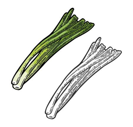 Ilustración de Bunch of fresh stalks onion. Vector black vintage engraving - Imagen libre de derechos