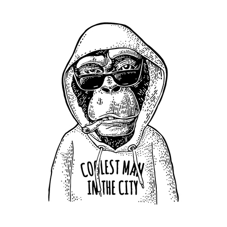 Illustration for Vintage monkey hipster dressed in the hoodie with lettering coolest man in the city. - Royalty Free Image